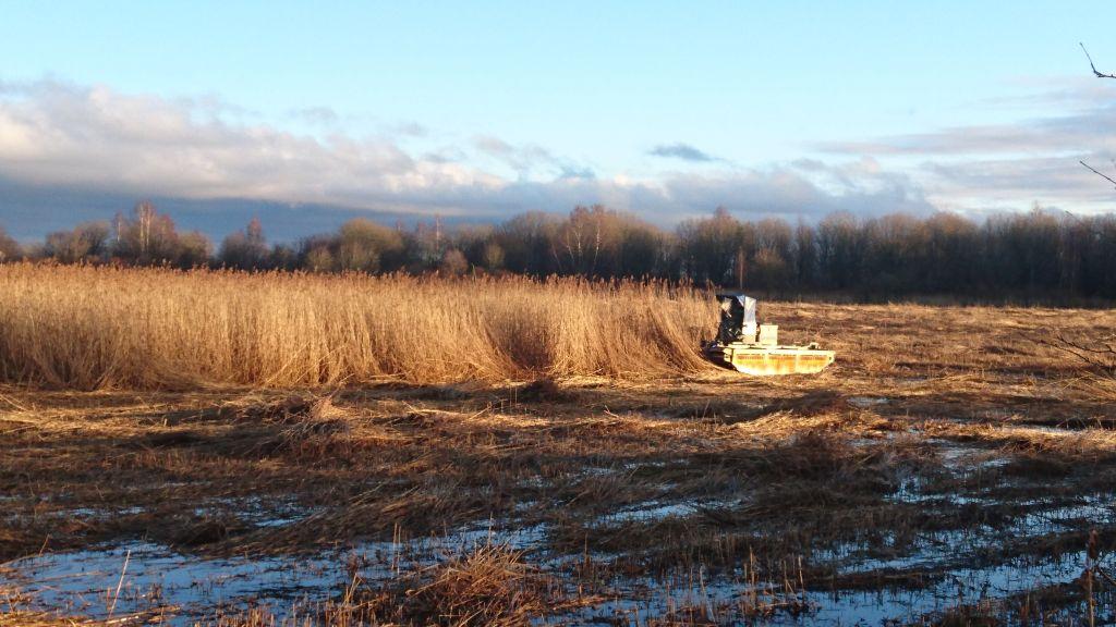 Mowing of wetlands (reed, scirpus, hay, etc.)